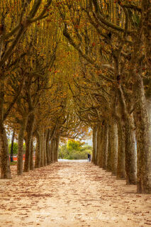 Path lined with autumn trees along the Mondego River in Coimbra, Portugal.