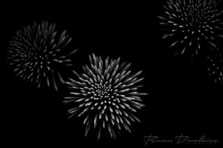 White bursts of flower petals on a black background at Powell Gardens in Missouri.
