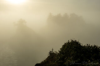 Tops of trees emerge from a golden shroud of mist in Oregon.