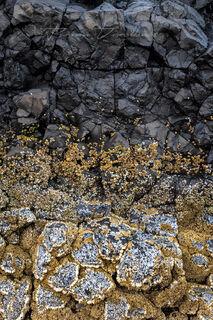 Yellow sea life grows on dark rock in on Southern Oregon Coast.