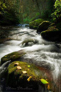 Water flows over moss covered rocks in a creek in Oregon.