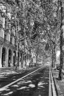 Passeig de Picasso in Barcelona, Spain in black and white.