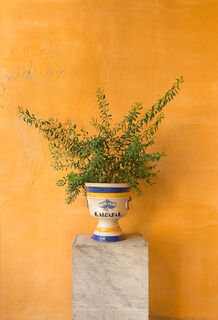 Green plant in decorative Spanish pot against yellow wall in the Jardines del Alcazar in Andalusia, Spain.