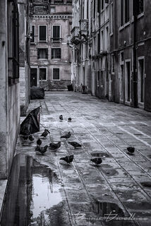 Empty alley with pigeons in Venice, Italy in black and white.