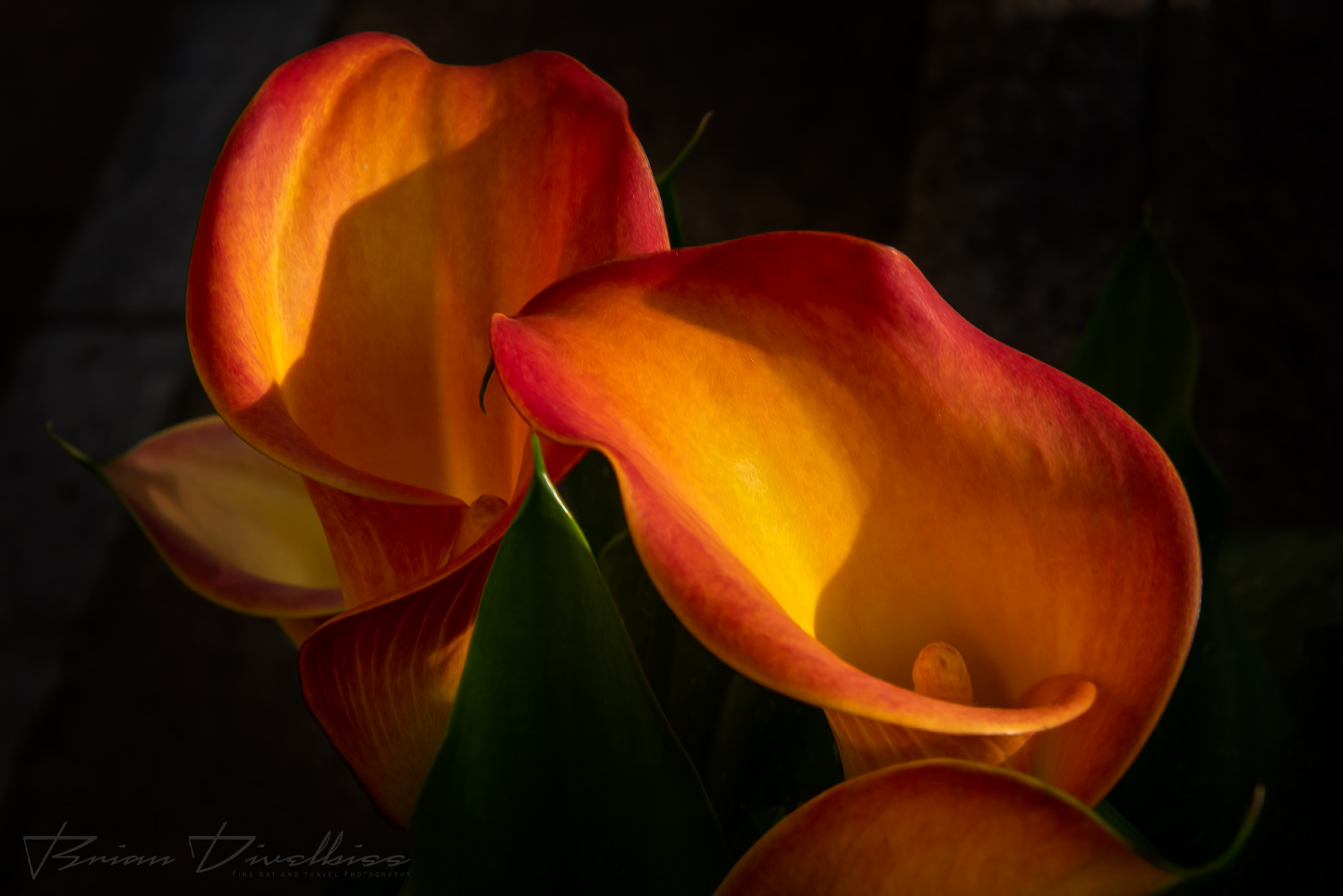 Close-up of colorful Calla lilies at farmer's market in Lucerne, Switzerland.