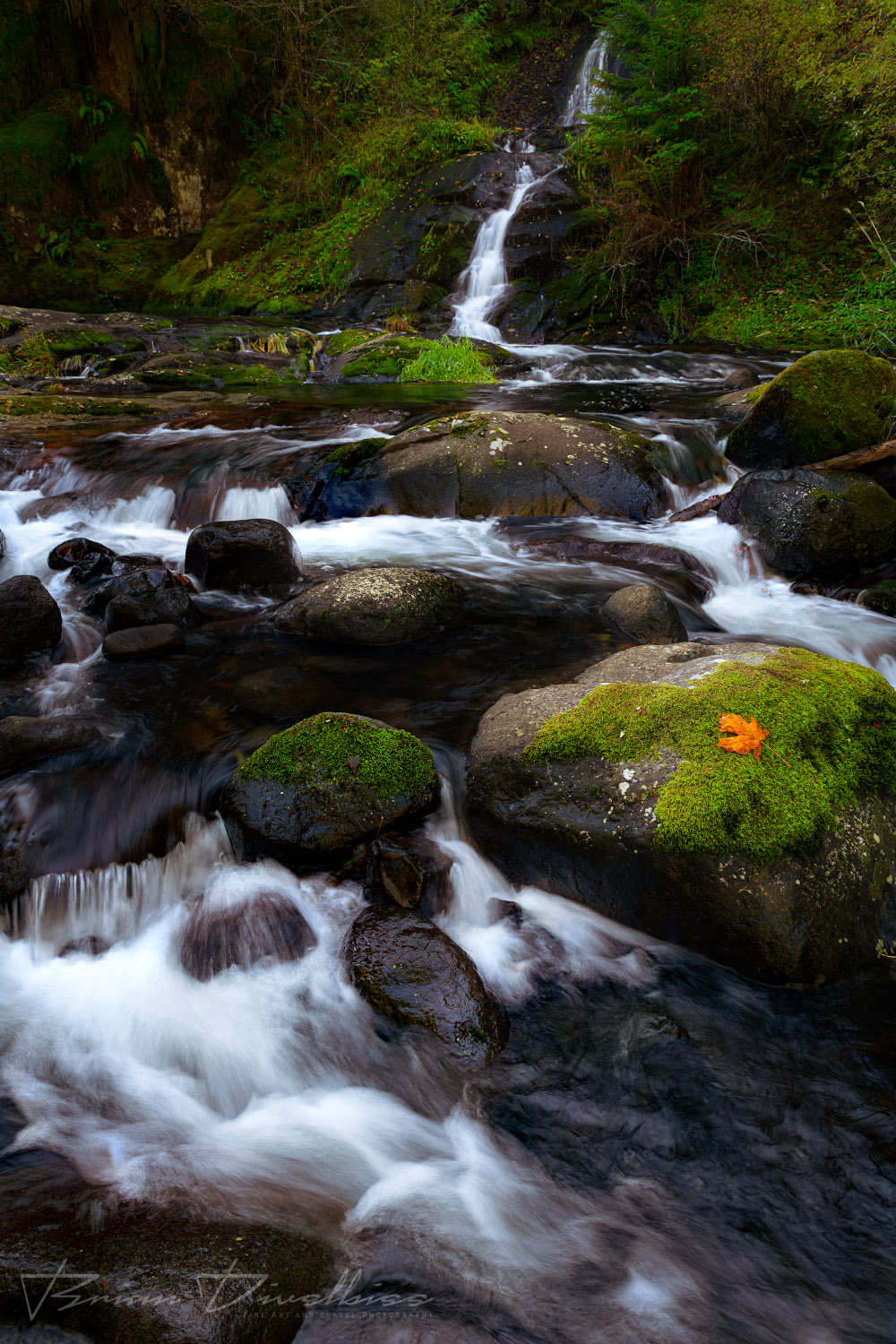Water from a distant waterfall flows over and between mossy rocks in Oregon.