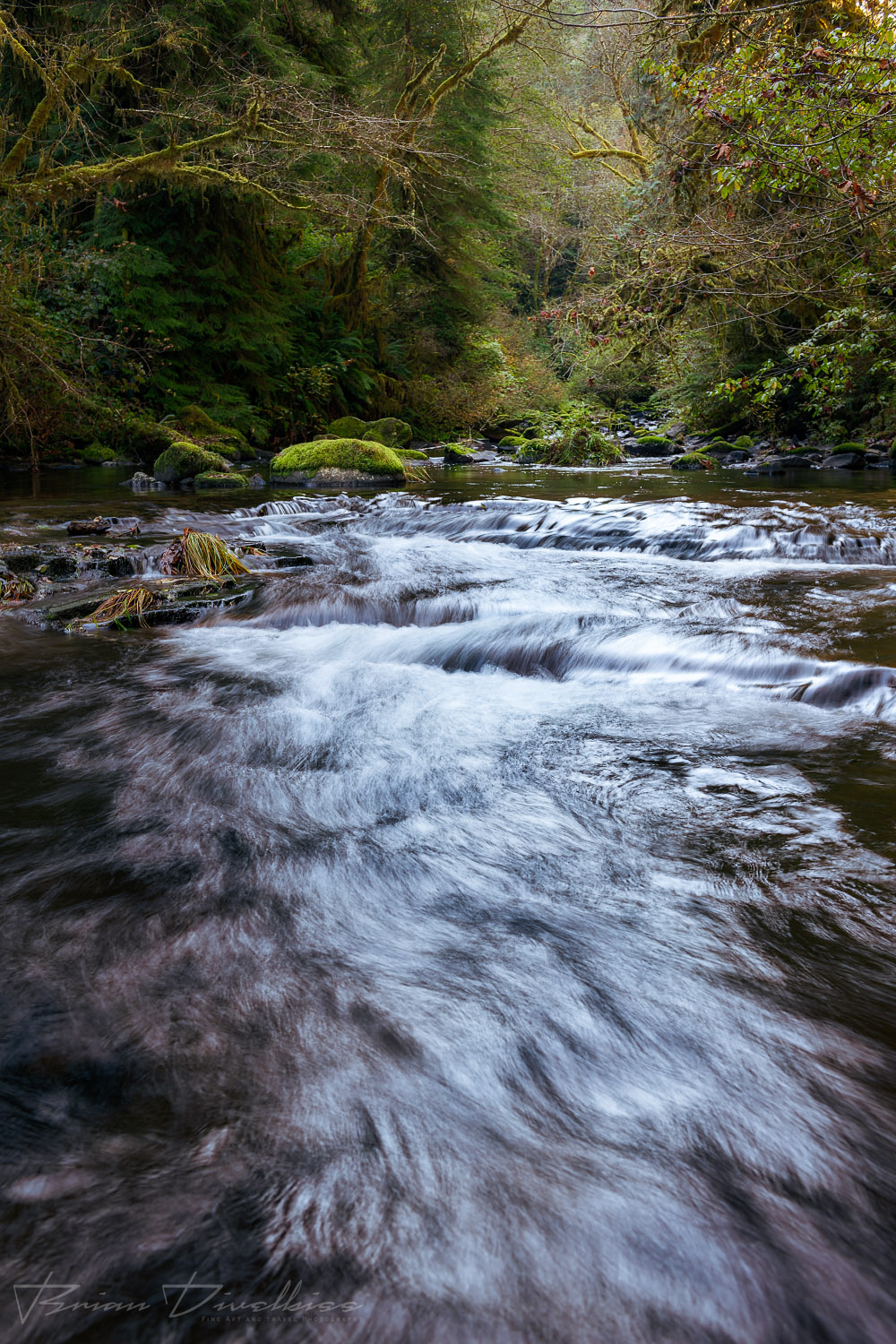 Rippling, flowing waters of a creek surrounded by greenery in Oregon.