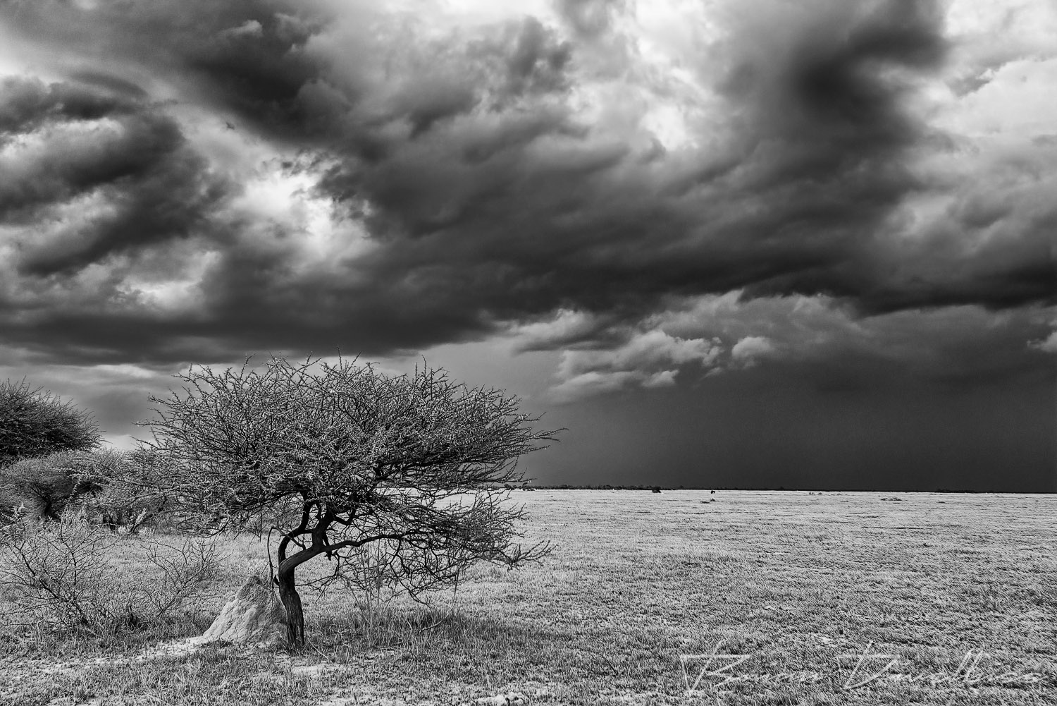 The impressive thunderheads of a swiftly moving afternoon storm in Nxai Pan National Park, Botswana, in black and white.