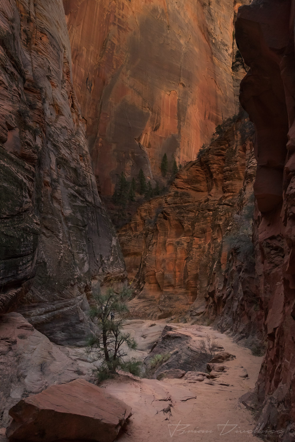 Narrow path and high walls of Weeping Rock Trail in Zion National Park.